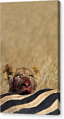 Thank You For Our Daily Bread Canvas Print by Basie Van Zyl