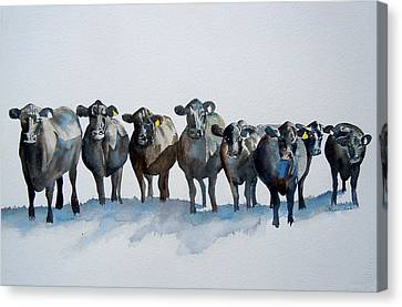 The Angus Eight Canvas Print by Sharon Mick