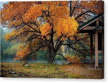 The Autumn Tree Canvas Print by TL Mair
