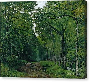 The Avenue Of Chestnut Trees Canvas Print by Alfred Sisley