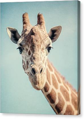 The Baby Giraffe Canvas Print by Lisa Russo