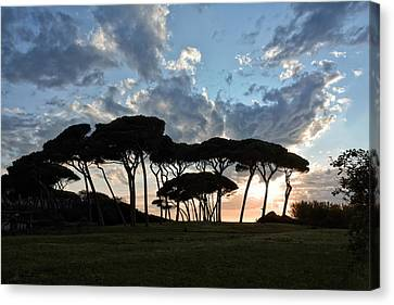 The Baratti Pine Trees Canvas Print by Joachim G Pinkawa