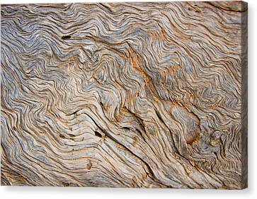 The Bark Of A Pine Is Sandblasted Canvas Print by Taylor S. Kennedy