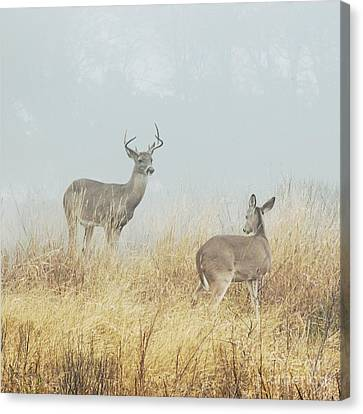 The Beautiful Creatures Canvas Print by Katya Horner