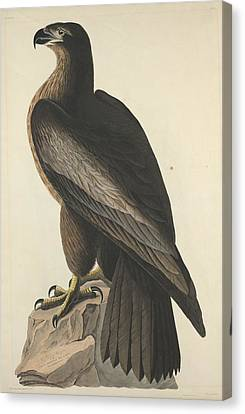 The Bird Of Washington Or Great American Eagle Canvas Print by John James Audubon