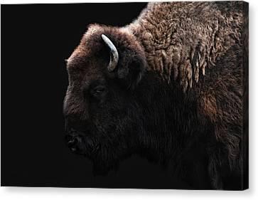 The Bison Canvas Print by Joachim G Pinkawa