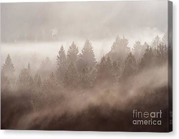 The Blow Of The Forest Canvas Print by Yuri Santin