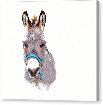 The Burro Canvas Print by Robin Hewitt