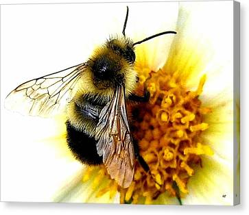 The Buzz Canvas Print by Will Borden