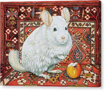 The Carpet Chinchilla Canvas Print by Ditz