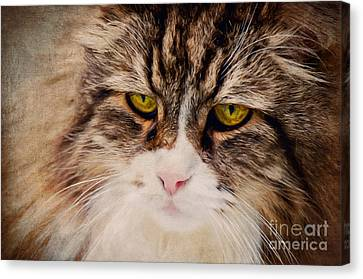 The Cat Canvas Print by Angela Doelling AD DESIGN Photo and PhotoArt
