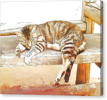 The Cat Is Back Canvas Print by Jan Hattingh