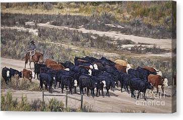 The Cattle Drive Canvas Print by Janice Rae Pariza
