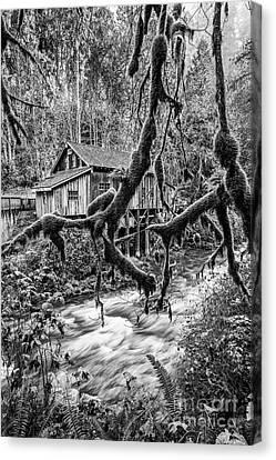 The Cedar Mill And Moss Canvas Print by Jamie Pham