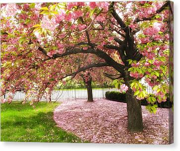 The Cherry Tree Canvas Print by Jessica Jenney