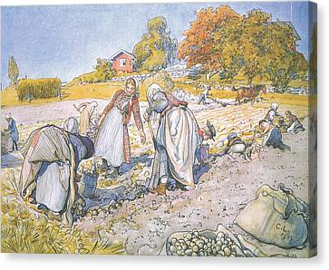 The Children Filled The Buckets And Baskets With Potatoes Canvas Print by Carl Larsson