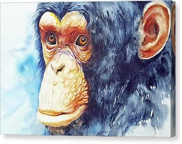 The Chimp_ Jojo Canvas Print by Arti Chauhan