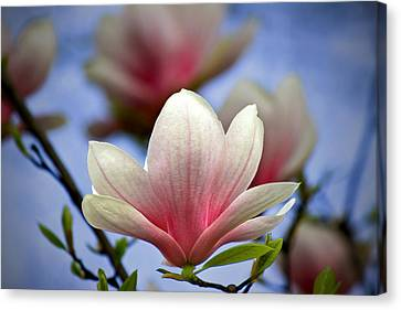 The Color Of Spring Canvas Print by Evelina Kremsdorf