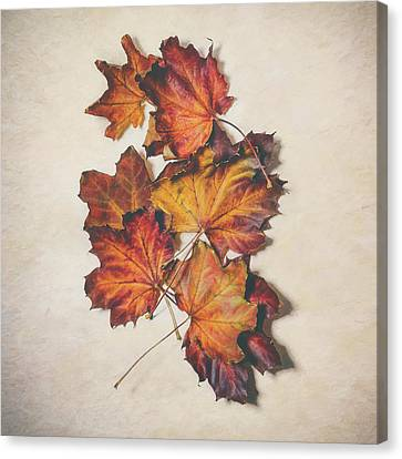 The Colors Of Fall Canvas Print by Scott Norris