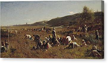 The Cranberry Harvest  Island Of Nantucket Canvas Print by Eastman Johnson