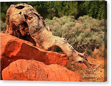 The Creature At Red Cliffs Canvas Print by Adam Jewell