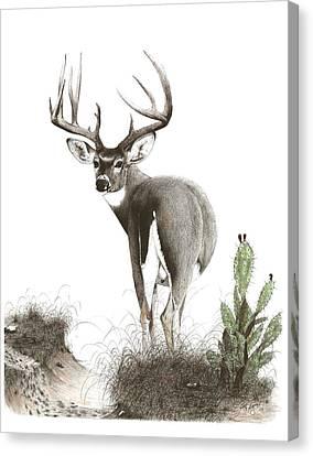 The Crossing Canvas Print by Steve Maynard