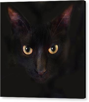 The Dark Cat Canvas Print by Gina Dsgn