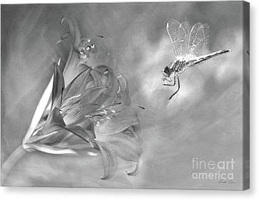 The Dragonfly And The Flower Canvas Print by Linda Lees