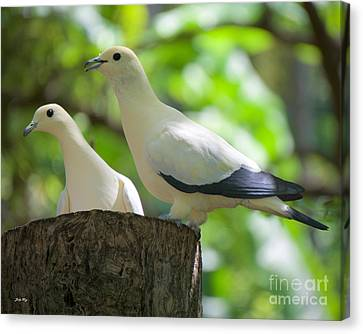 The Duet Canvas Print by Judy Kay