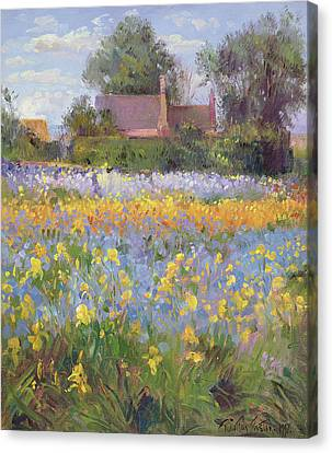 The Enclosed Cottages In The Iris Field Canvas Print by Timothy Easton