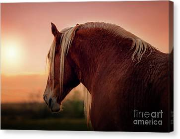 The End Of A Long Day At The Ranch Canvas Print by Tamyra Ayles