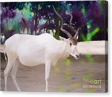 The Endangered Addax Canvas Print by Judy Kay