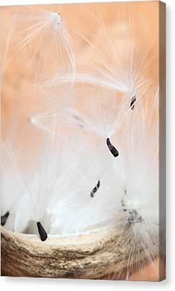 The Escape Canvas Print by Paul Cowan