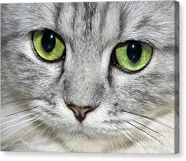 The Face Canvas Print by  Graham Taylor