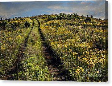 The Farmer's Road Canvas Print by Tamyra Ayles