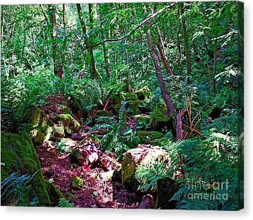 The Forrest Floor Canvas Print by Chris Smith