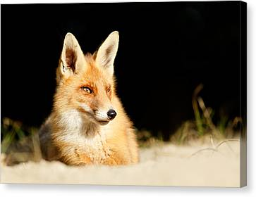 The Fox And The Light Canvas Print by Roeselien Raimond
