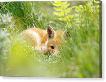 The Fox Kit And The Ferns Canvas Print by Roeselien Raimond