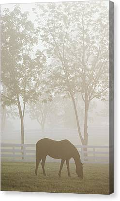 The Great Thoroughbred Gelding Forego Canvas Print by Raymond Gehman
