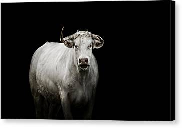 The Guardian Canvas Print by Paul Neville