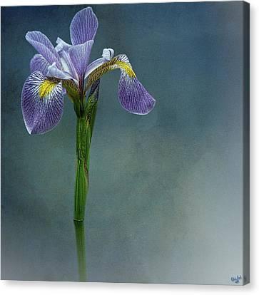 The Harlem Meer Iris Canvas Print by Chris Lord