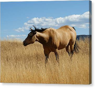 The Horse Canvas Print by Ernie Echols