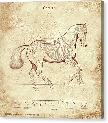 The Horse's Canter Revealed Canvas Print by Catherine Twomey