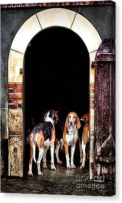 The Hound Canvas Print by Olivier Le Queinec