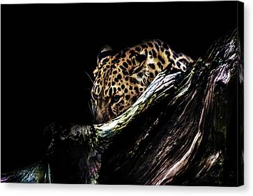 The Hunt Canvas Print by Martin Newman