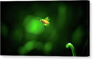 The Incredible Journey Of Mrs. Honeybags Canvas Print by Mark Andrew Thomas