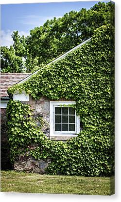 The Ivy House Canvas Print by Kim Hojnacki