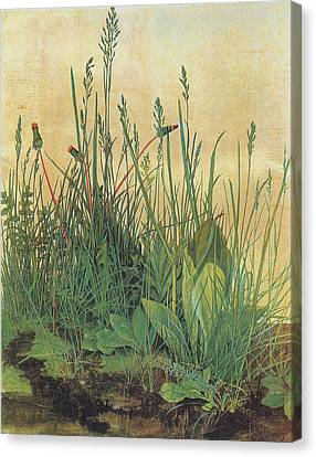 The Large Piece Of Turf Canvas Print by Albrecht Durer