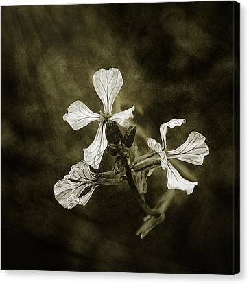 The Last Flowers Of Autumn Canvas Print by Scott Norris