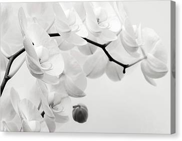The Last Orchid Canvas Print by Wim Lanclus